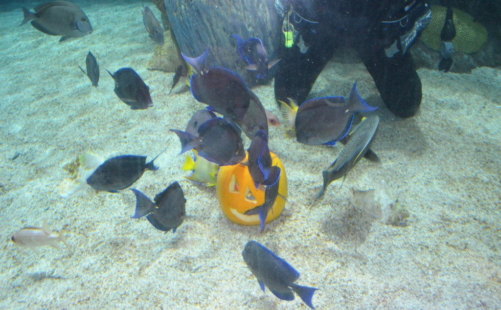 mystic aquarium under water pumpkin carving 1