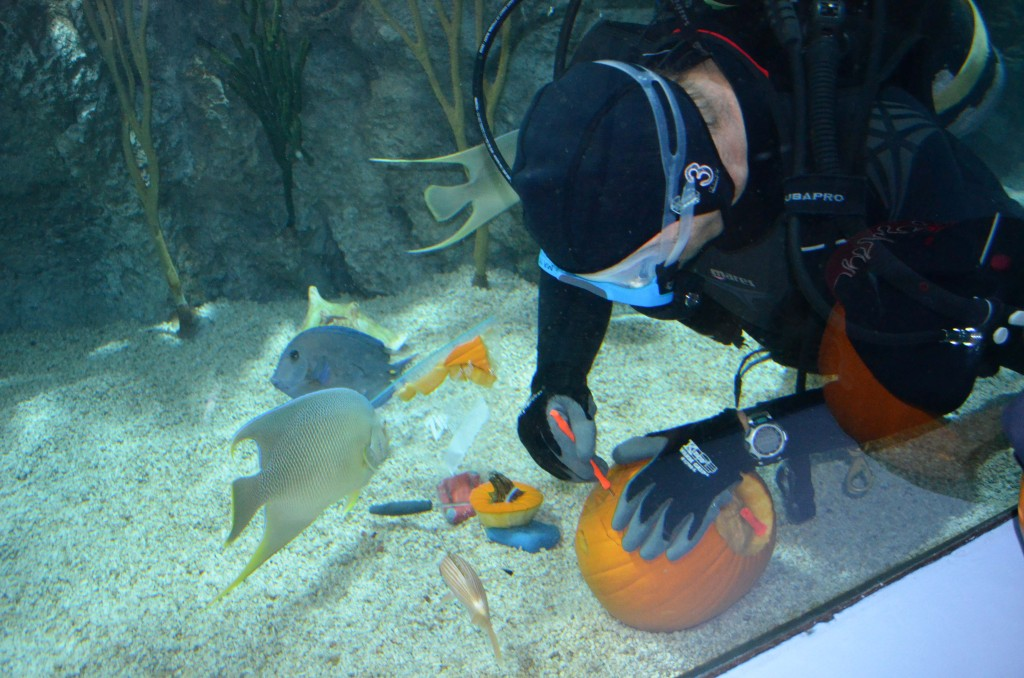 mystic aquarium underwater pumpkin carving