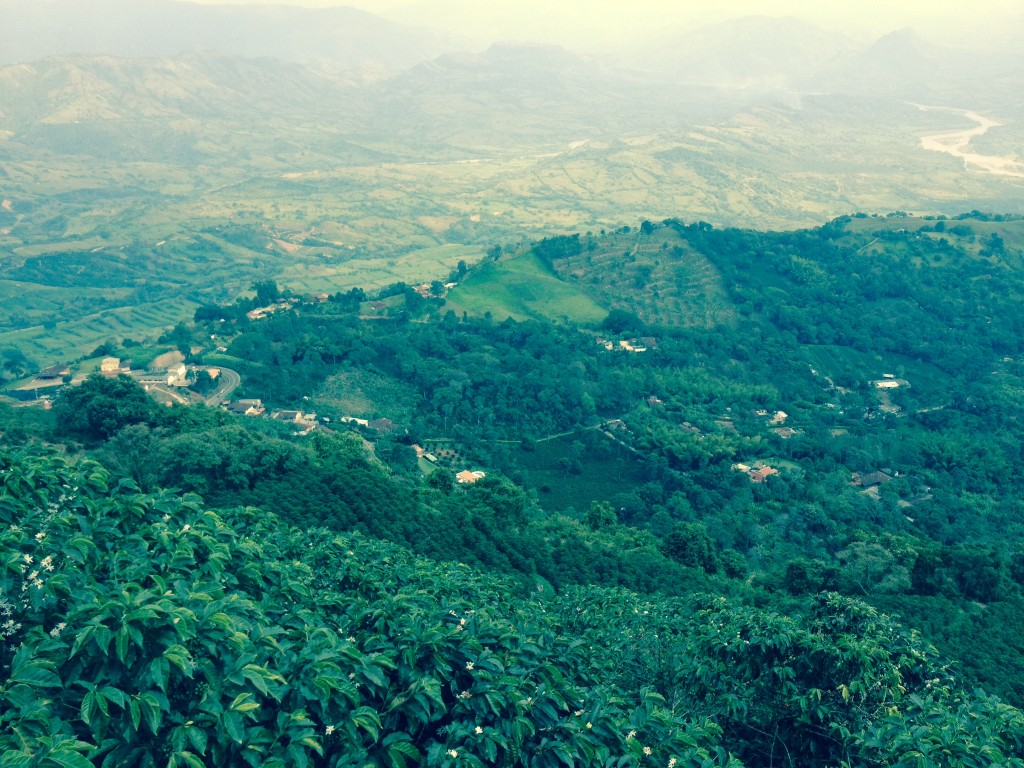 Mountains of Colombia, Colombian coffee growers