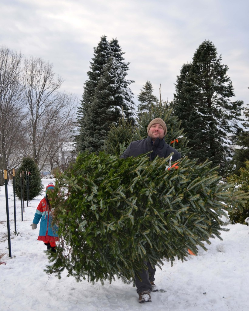 cutting-down-Christmas-Tree