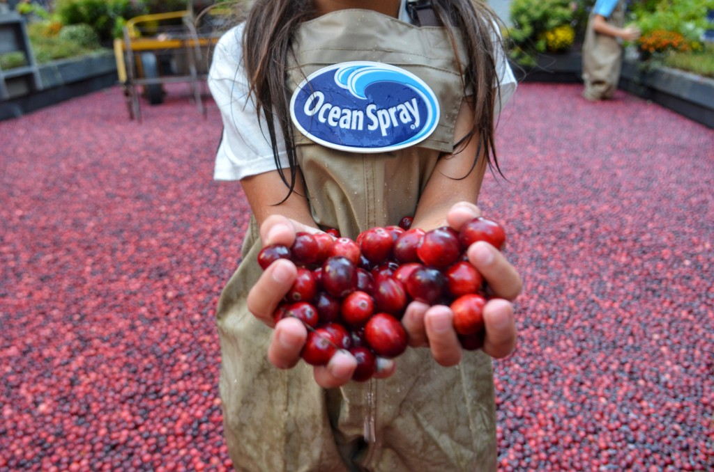 cranberry-bog-Rockefeller-center-OceanSpray