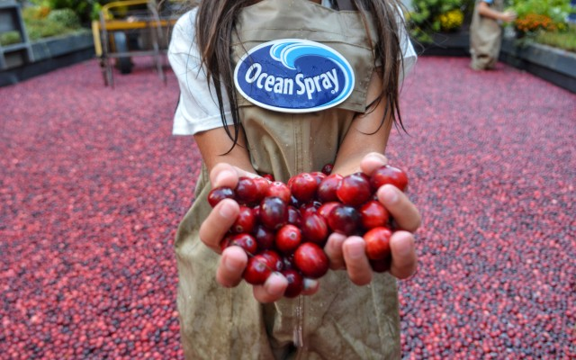 Cranberry Classroom: A Visit To Ocean Spray®'s Cranberry Bog