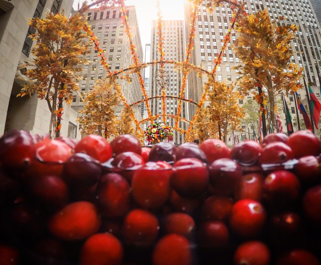 underwater-photography-cranberry-bog-Rockefeller-Center-Ocean-Spray