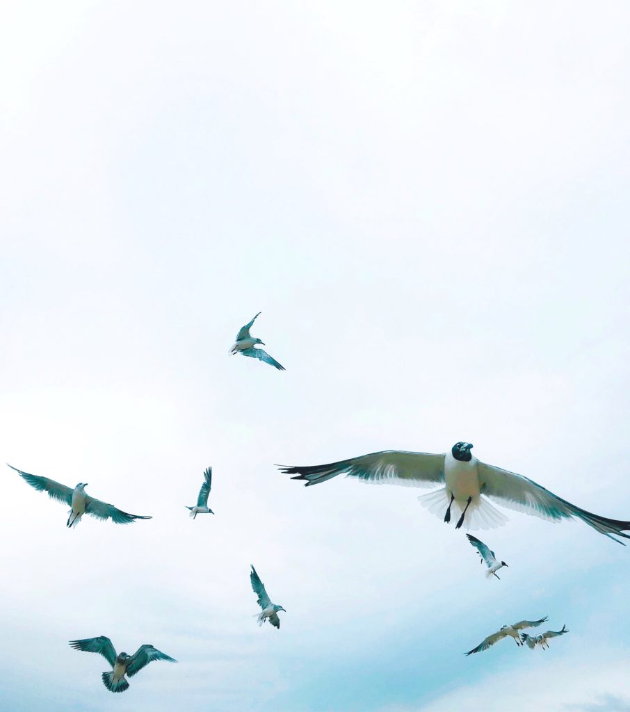 beautiful-minimal-seagulls